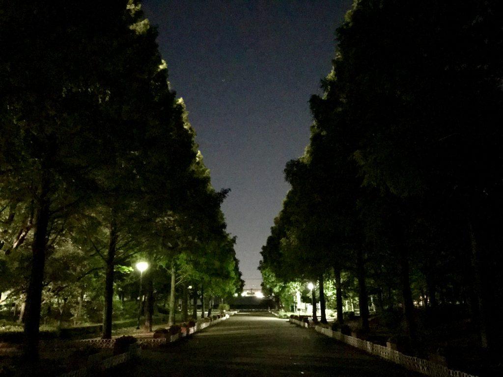 夜のそうか公園