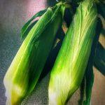 Corn @SOKA / とうもろこし @草加