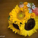 Sunflower @SOKA / ひまわり @草加